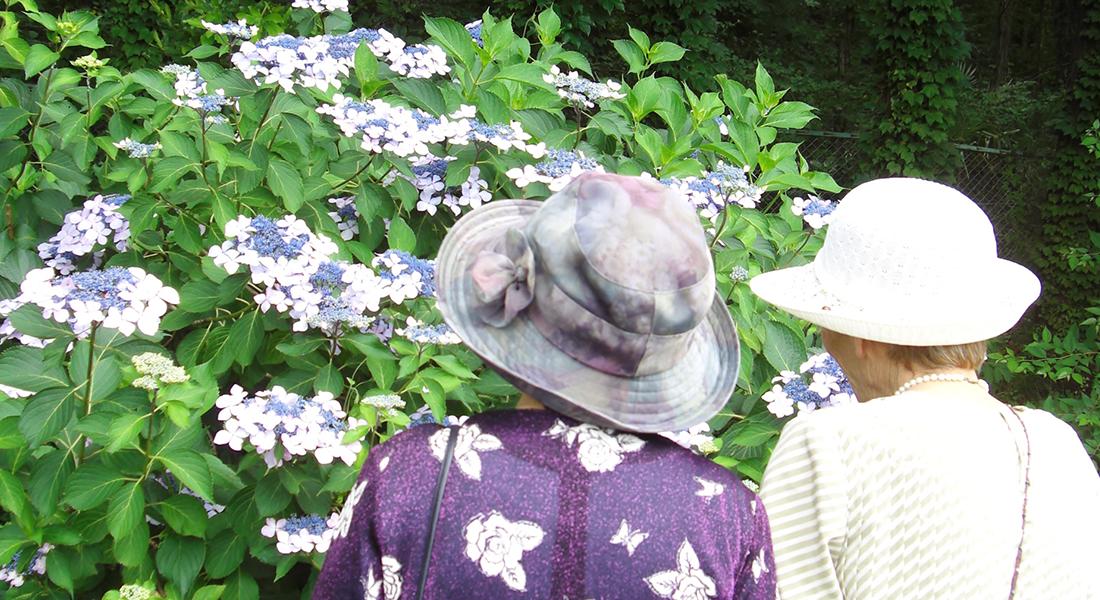 フローラ菜の花